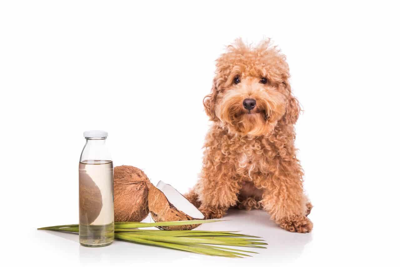 Kokosnussöl für Haustiere